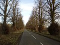 Tree Avenue on Dungee to Hinwick Road - geograph.org.uk - 314287.jpg