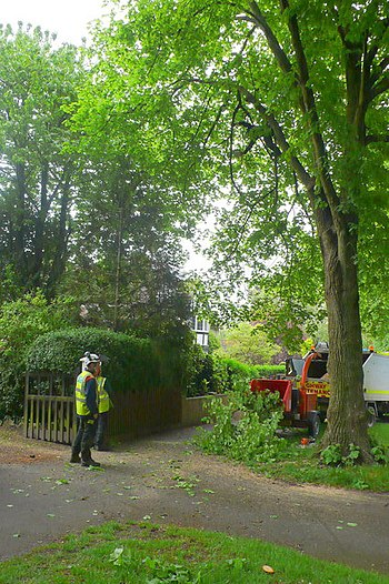 English: Tree Trimming, Queens Avenue, Dorches...
