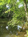 Tree on the D&R Canal.jpg