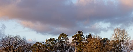 Tree tops during the sunset, Bowness on Windermere, England.jpg