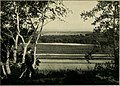 Trees, fruits, and flowers of Minnesota (1904) (14596720138).jpg