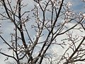 Trees in winter after snow and ice with branches.JPG