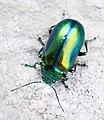 Triglav National Park - insect.jpg