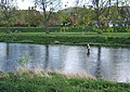 Trout-fishing at Peebles - geograph.org.uk - 1282981.jpg