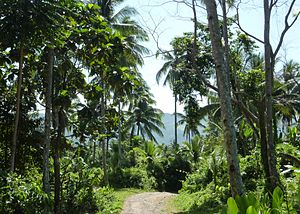 Surigao del Norte - Coconut trees in the hills west of Tubod