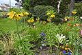 Tulipes en fleur au Jardin Massey de Tarbes 14.jpg