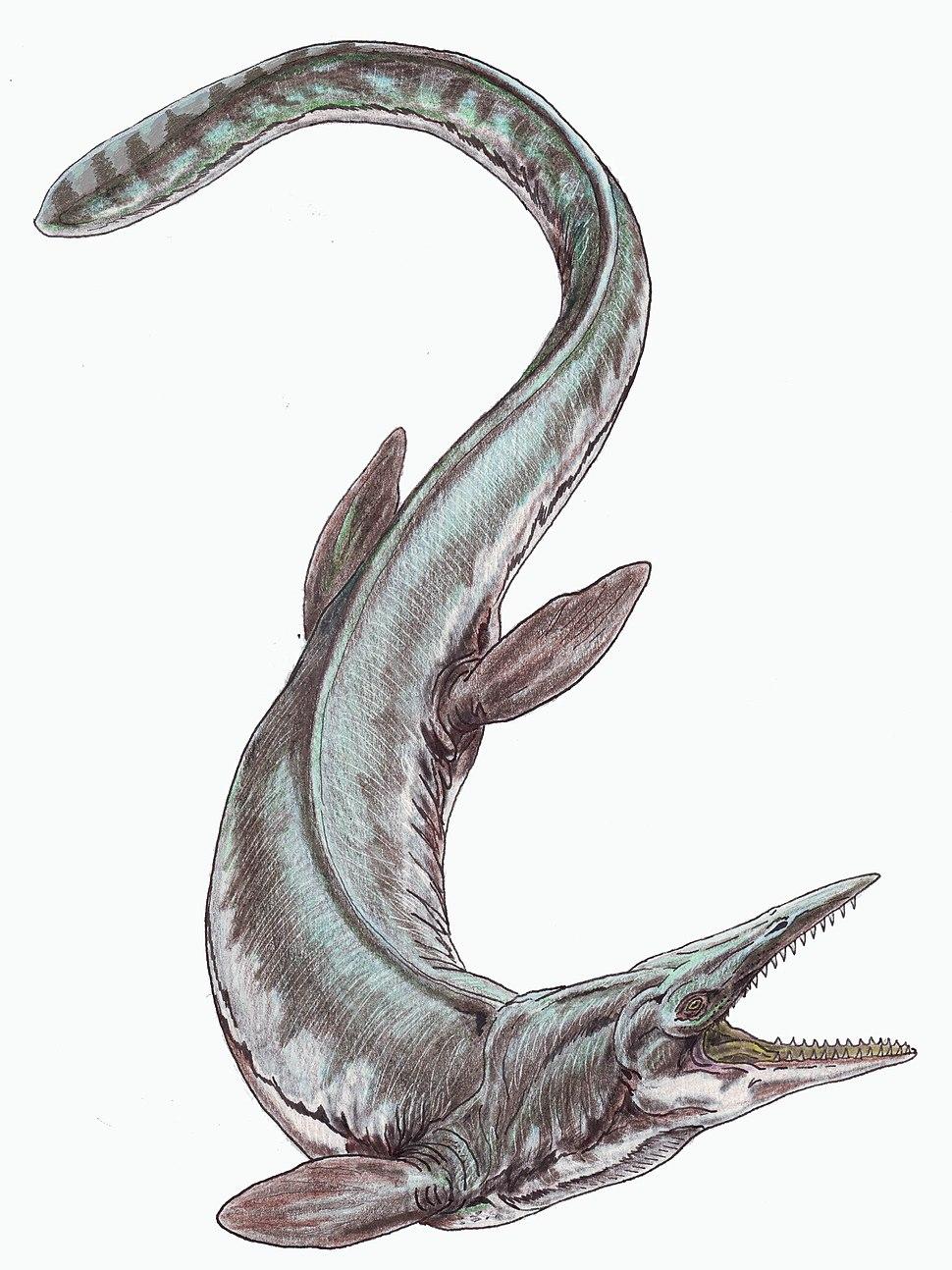 Tylosaurus proriger12DB