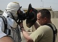 U.S. Air Force Firefighters advise, Iraqi Fire Training Course DVIDS165459.jpg