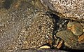 US-CA-YubaRiver-PurdonCrossing-RipplesAndBubbles-2012-04-15T14-43-56 v1.jpg