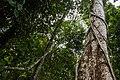 USAID Measuring Impact Conservation Enterprise Retrospective (Philippines; Nagkakaisang Tribu ng Palawan) (40247962392).jpg