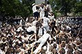 US Navy 030519-N-5319A-010 United States Naval Academy Freshman attempt climbing the Herndon Monument, a 21-foot gray obelisk covered in more than 200 pounds of lard, marking the end of their first year of training.jpg