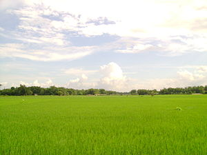 Haldibari, India - Haldibari Landscape