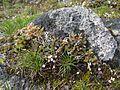 Unidentified Flowers - Flickr - brewbooks (1).jpg