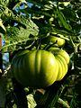 Unos tomates cojonudos, oiga - panoramio.jpg