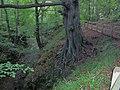 Unusual Tree - geograph.org.uk - 286797.jpg
