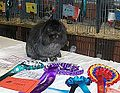 Upton's Steel, Mini Lion Lop.jpg