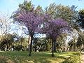 V Borghese - fioriture x 2 P1070722.JPG