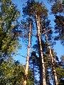 Valdaysky District, Novgorod Oblast, Russia - panoramio (3292).jpg
