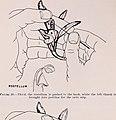 Vanilla culture in Puerto Rico (1948) (19948979513).jpg