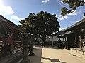 View of camphor tree in Dazaifu Temman Shrine.jpg