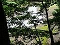 View through trees, the Little Don enters Underbank Reservoir - geograph.org.uk - 921309.jpg