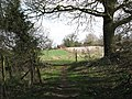 View towards Manor Farm in Arminghall - geograph.org.uk - 1772184.jpg