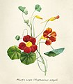 Vintage Flower illustration by Pierre-Joseph Redouté, digitally enhanced by rawpixel 44.jpg