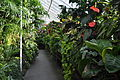Volunteer Park Conservatory - Fern House interior 01.jpg