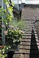 Vorbau für Katzen und Pflanzen 23.jpg
