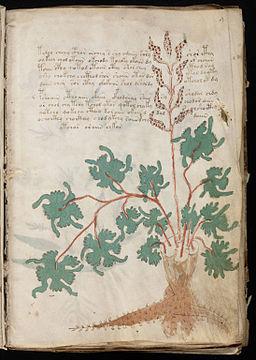 Voynich Manuscript (19)