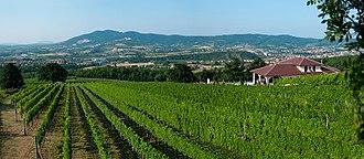 Aranđelovac - Vineyards outside Arandjelovac