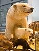 WLANL - jpa2003 - ijsbeer met jong.jpg