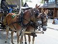 Wagon mules, Talkeetna, Alaska.jpg