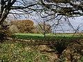 Westcott Wood from Villaton Plantation - geograph.org.uk - 608461.jpg
