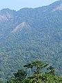 Western Ghats Vegetation - View en route Kottiyoor to Mananthavady3.jpg