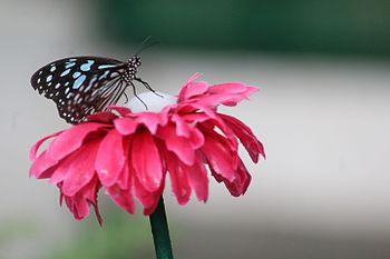 Where Is My Nectar.jpg
