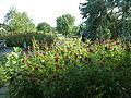 Whistlewood Farm, Rhinebeck, New York P1150894.JPG