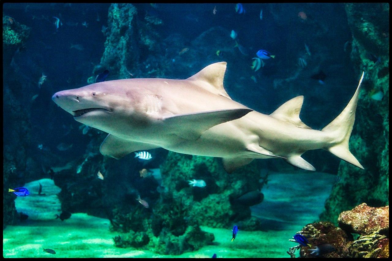 Image Result For Aquarium Sand
