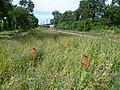 Wild flowers alongside Tramlink by Coombe Road (geograph 2527721).jpg