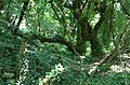 Wooded Valley - geograph.org.uk - 905136.jpg