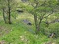 Woodland beside the Inverie River - geograph.org.uk - 920887.jpg