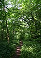 Woodland path near River Doe - geograph.org.uk - 839109.jpg