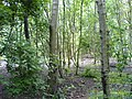 Woods - geograph.org.uk - 465373.jpg