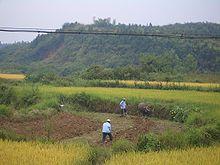 extensive commercial farming