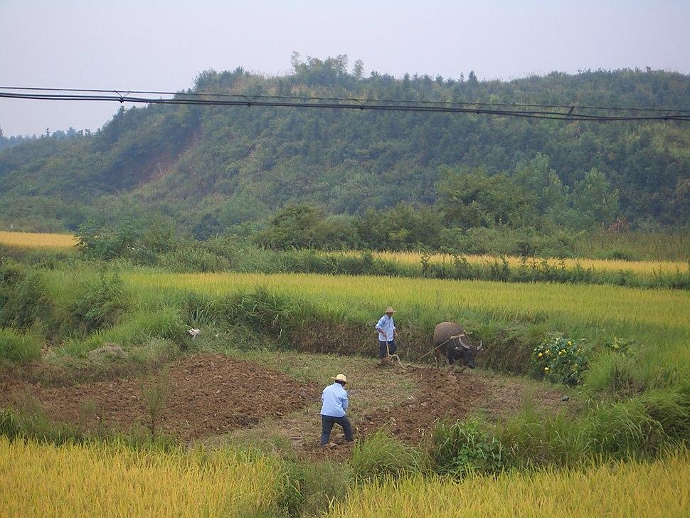 Xianning-fields-9731