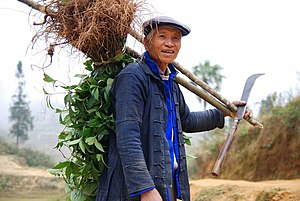 Agriculture in China - A farmer of the Hani minority, famous for their rice terraced mountains in Yuanyang County, Yunnan