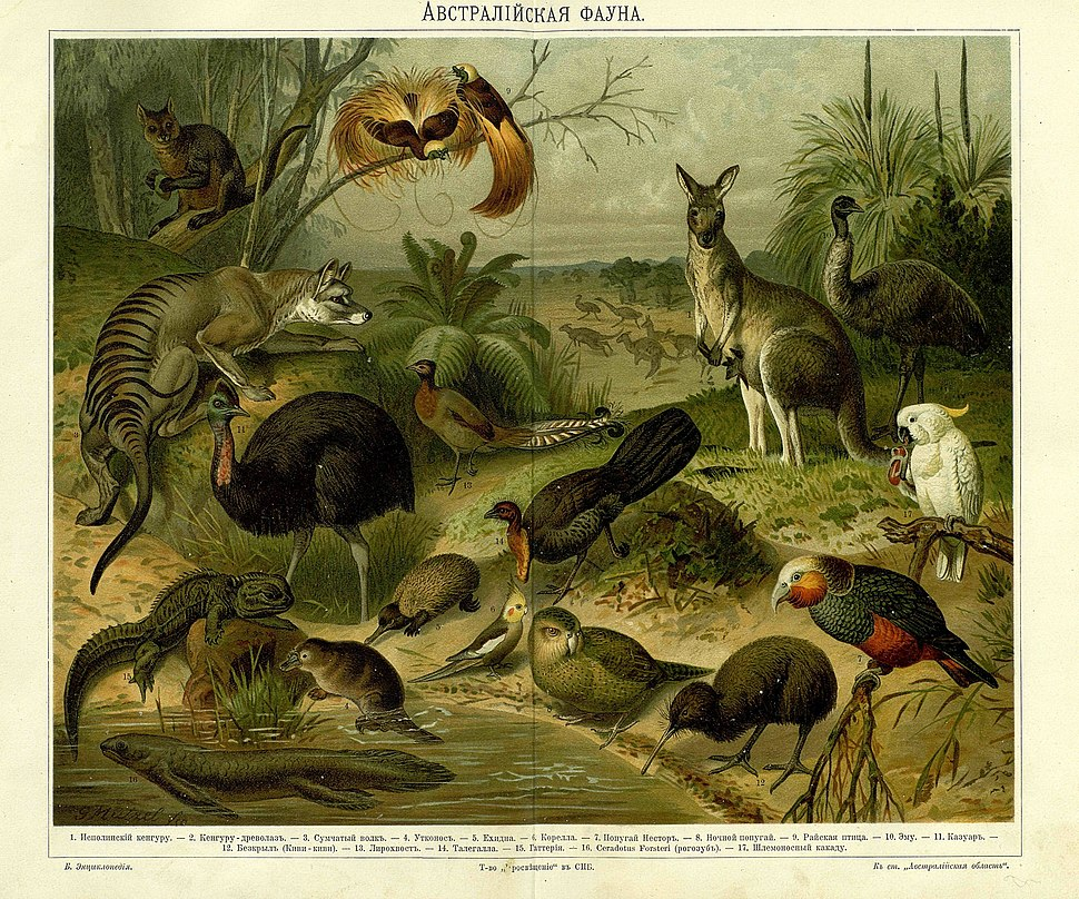 Yuzhakov Big Encyclopedia Australian fauna