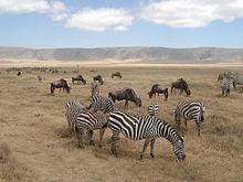 Zebras Food Diet