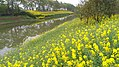 Zhangjiagang, Suzhou, Jiangsu, China - panoramio (152).jpg