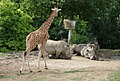 Zoo Parc Beauval (4872361813).jpg